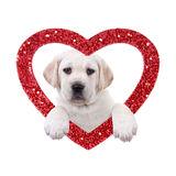 valentine-dog-labrador-puppy-red-glitter-heart-white-35663244