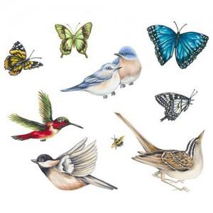 Birds--Butterflies