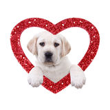valentine-dog-labrador-puppy-red-glitter-heart-white-35663244