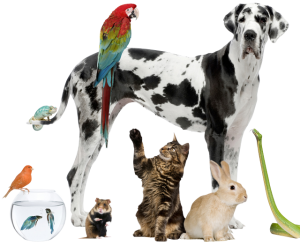 Pet-Care-Information